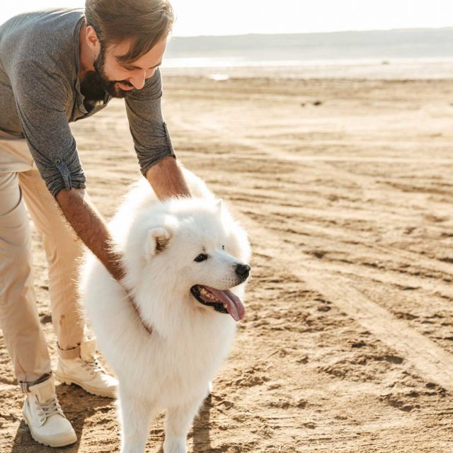 cheerful-young-guy-playing-with-his-dog-UGQ24TT